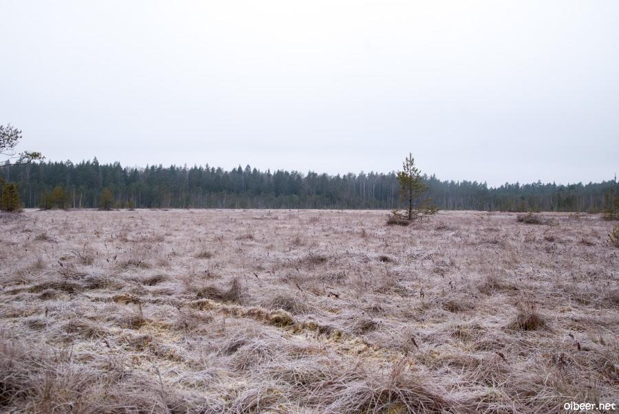 Верховое болото Карьер Сима, Симская трясина